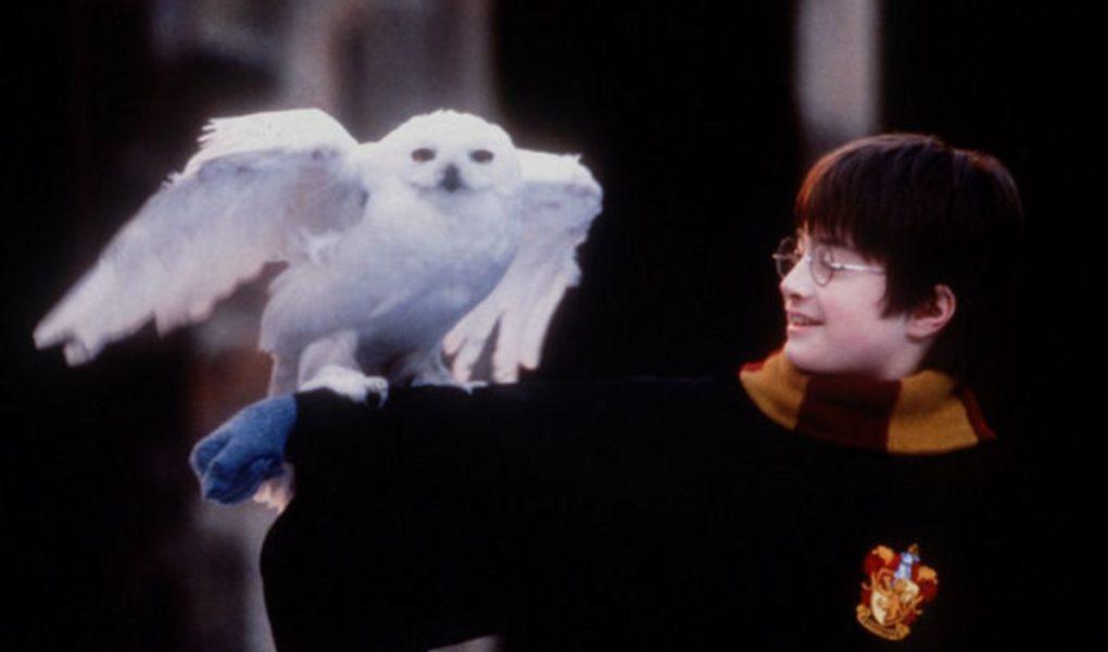 Hedwige, interprété par Gizmo dans la saga Harry Potter