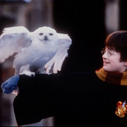 Hedwige, interprété par Gizmo dans la saga Harry Potter