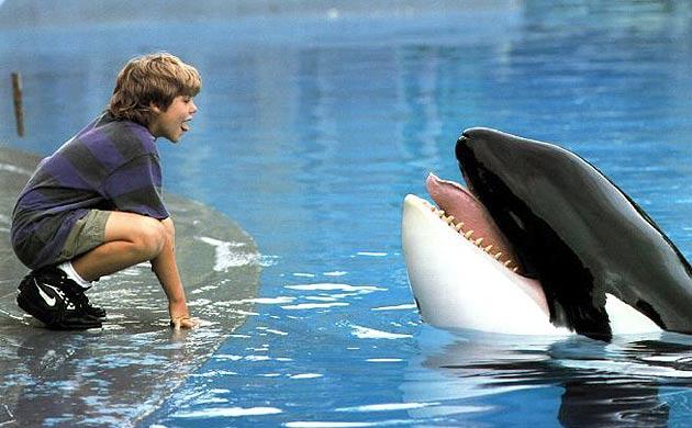 Keiko l'orque de Sauvez Willy remis en liberté