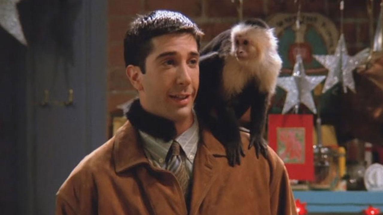 Marcel dans Friends interprété par Katie et Monkey