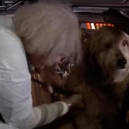 Einstein, le chien de Doc dans Retour vers le futur